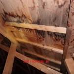 雨漏りでの火災保険例